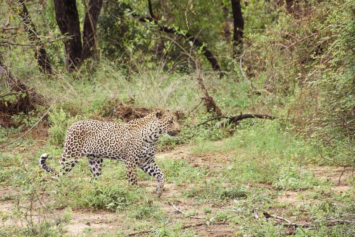 sudafrica parque nacional kruger ART 230: VIAJANDO: EL TIEMPO EN TU DESTINO SUDÁFRICA