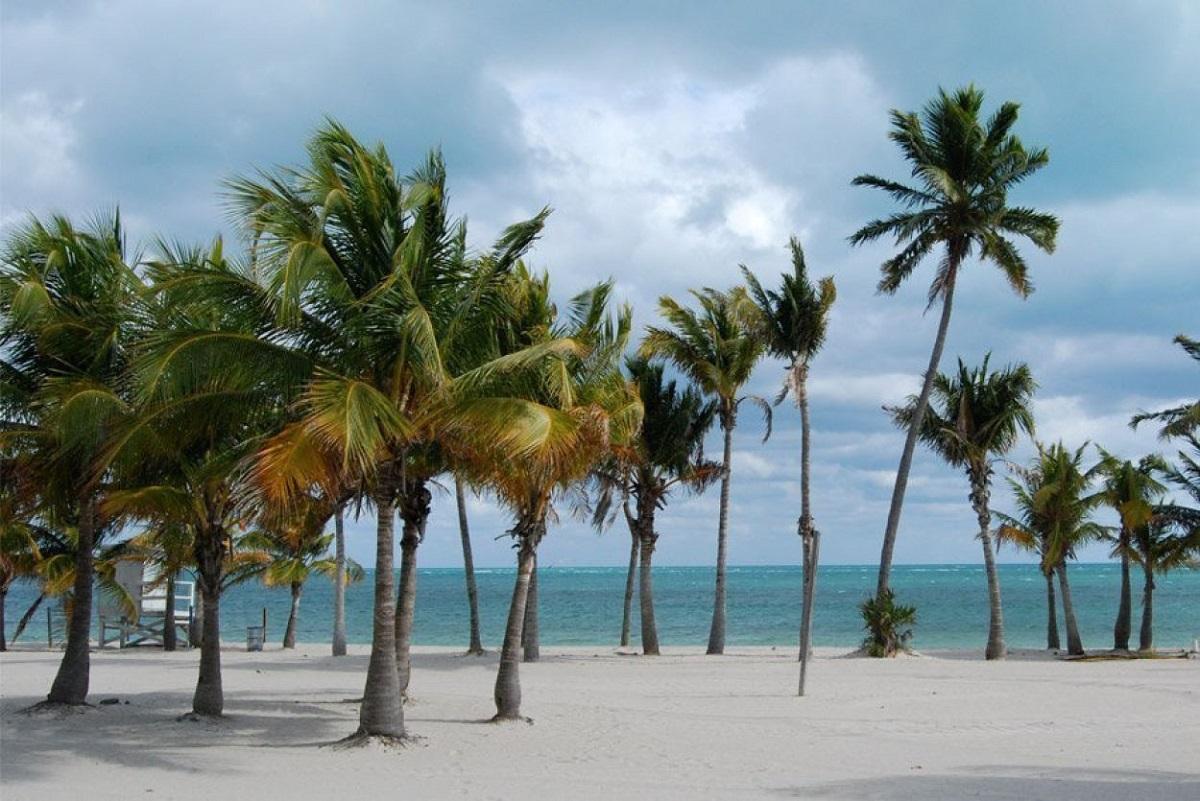 miami crandon park beach ART 233: VIAJANDO: EL TIEMPO EN TU DESTINO MIAMI
